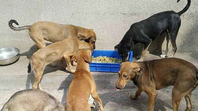 AMIDST LOCKDOWN, SOULFLOWER CONTINUES TO FEED MUMBAI'S STRAY CATS & DOGS