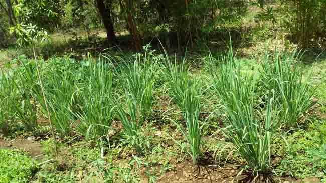 "Khanvel Resort Turns ""Atmanirbhar"", Uses Resort Property to Grow Veggies"