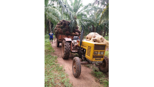 3F Oil Palm company introduces more transport incentives to oil palm farmers