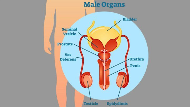 ENLARGED PROSTATE CAN BE THE CAUSE OF URINATION PROBLEMS